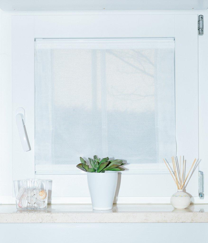 Echeveria-agavoides-window.jpg